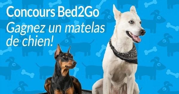 Concours GAGNEZ UN MATELAS DE CHIEN BED2GO!