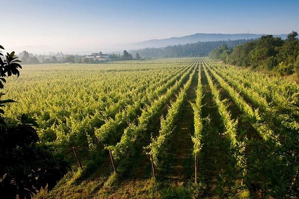 Concours Gagnez un voyage dans la région de Vinho Verde au Portugal!