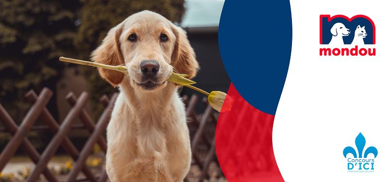 Concours Gagnez jusqu'à 6 mois de nourriture pour votre animal grâce à Mondou!